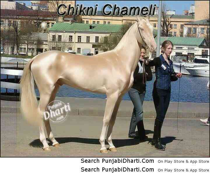 World's Most Beautiful Horse