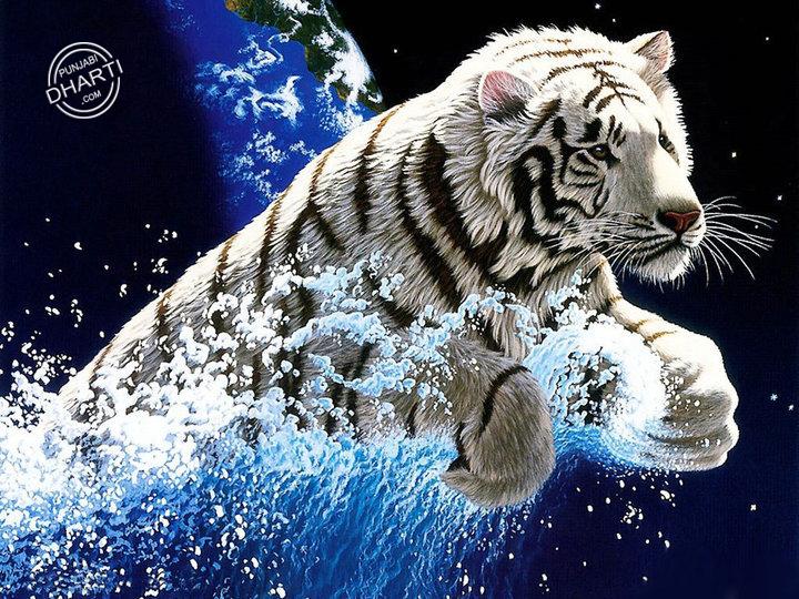 Beautiful Lion Wallpaper